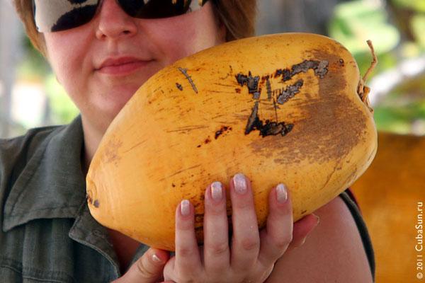 Кокос как материал для производства автозапчастей — исследования ученых в Техасе.