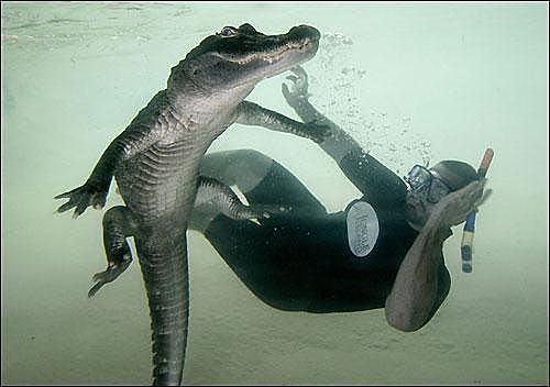 Шоу с крокодилами Шона Маннинга в Майами