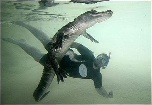 Шоу с крокодилами Шона Маннинга в Майами.