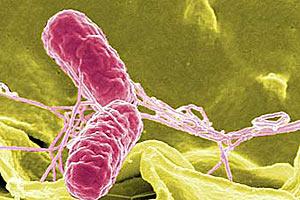 Новое бактериологическое оружие США