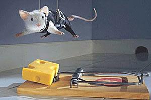 За сыром над мышеловкой — www.10-top.ru