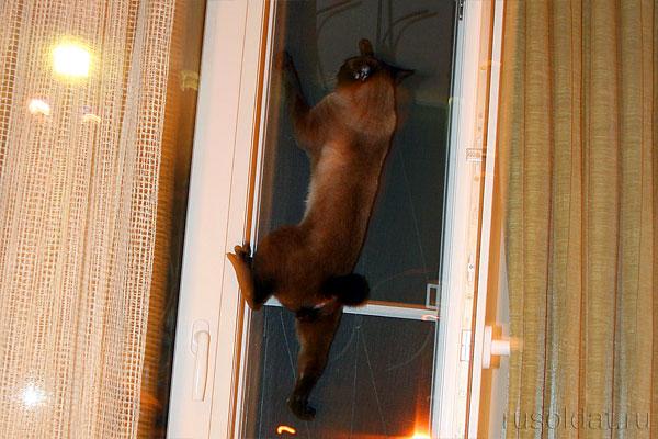 А наш как услышал про Исландию, к окну полез. С Курилами перепутал, у него там родня дальняя.