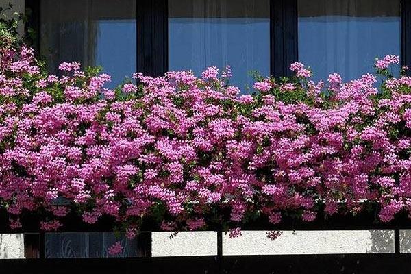 Лучший балкон Екатеринбурга — 3 место.