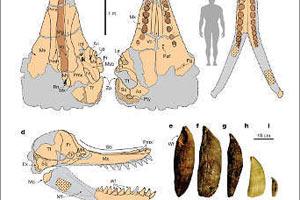 В Перу раскопали уникальные челюсти