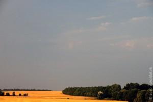 Сжатое поле. Август 2010 года.