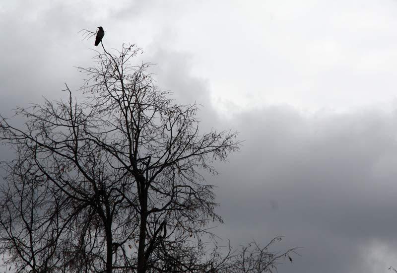 Наверху сидит умный и гордый птиц.
