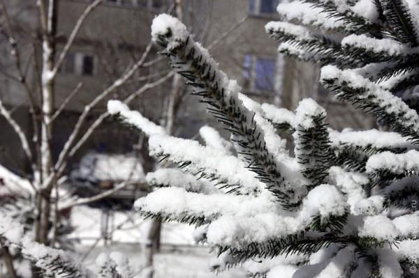 Снег. Декабрь 2011 г.